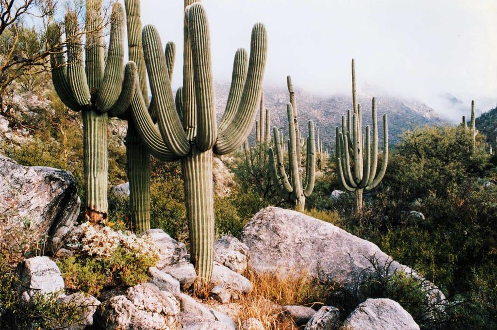 state park AZ
