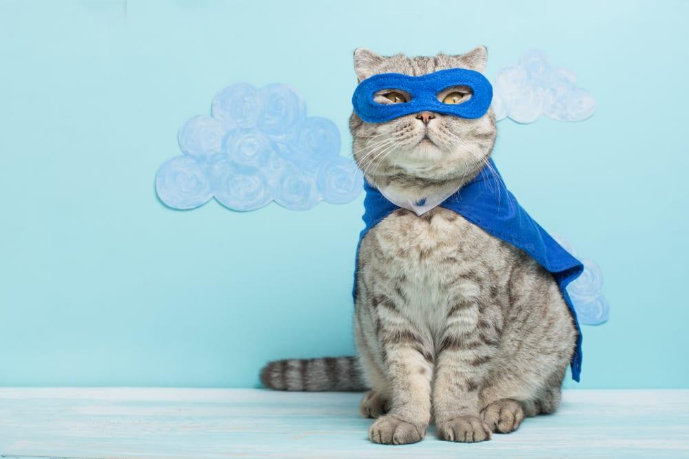 Whiskas cat